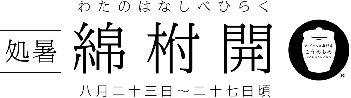 処暑・綿柎開(しょしょ・わたのはなしべひらく)8月23日〜27日頃